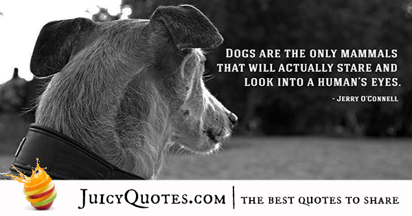 Quotes About Dogs - 11