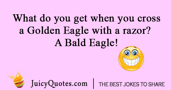Bald Eagle Bird Joke