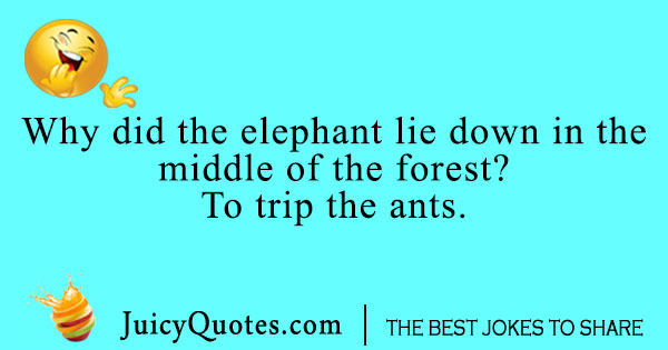 Elephant and ant joke