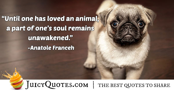 Loving An Animal Quote