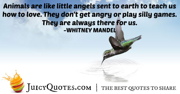 Animals Are Angels Quote