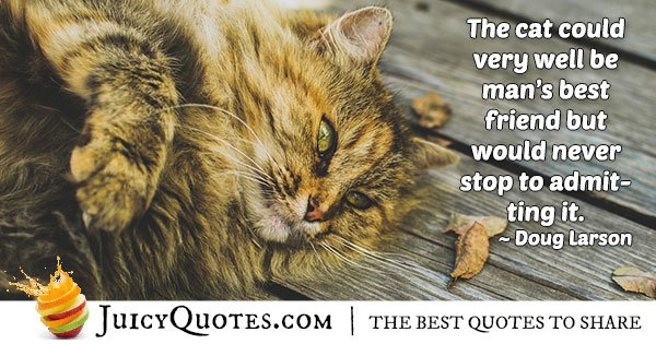 Cats Are My Best Friends Quote