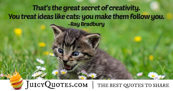 Silly Cat Quote