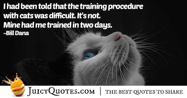 Training Cats Quote