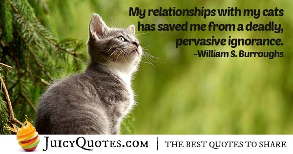 Relationship With Cats Quote