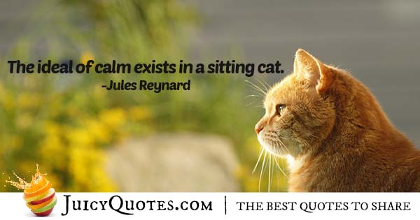 Sitting Cat Quote