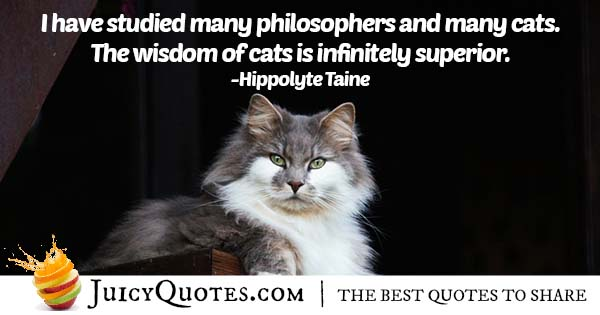 Wisdom of Cats Quote