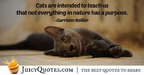 Quote About Cats