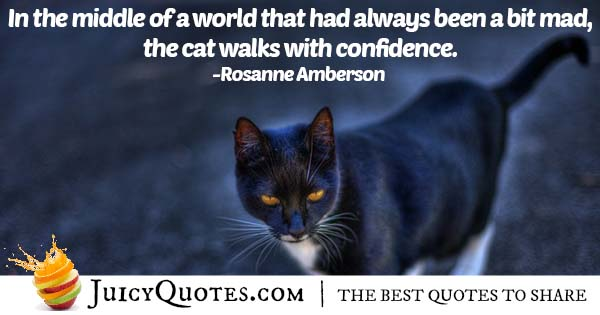 Walking Cat Quote