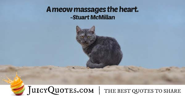 Cat Meow Quote