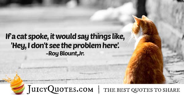 Talking Cat Quote