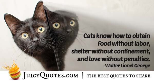 What Cats Know Quote