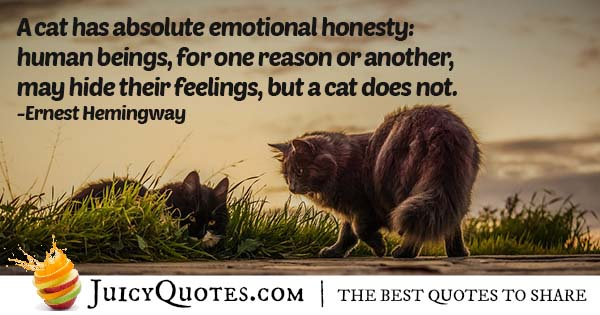 Cats Emotions Quote