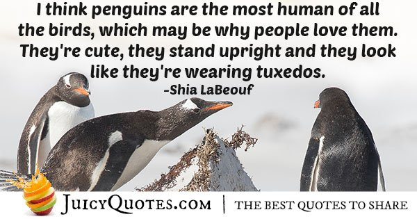 Penguins Are Cute Quote