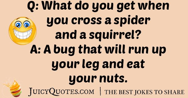 Squirrel Spider Joke