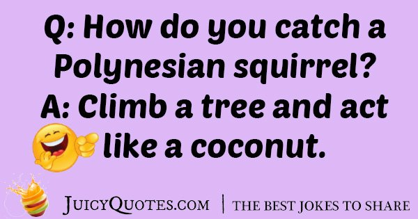 Squirrel Coconut Joke