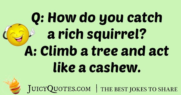 Rich Squirrel Joke