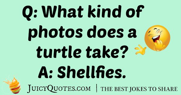 Turtle Photo Joke