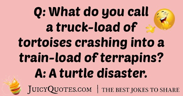 Tortoises Crashing Joke