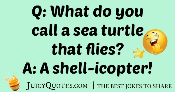 Silly Sea Turtle Joke