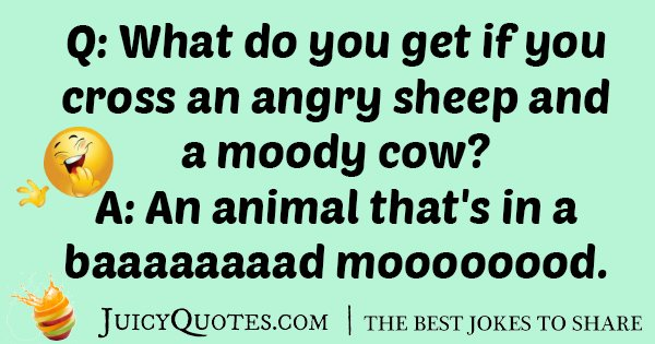Angry Sheep Joke